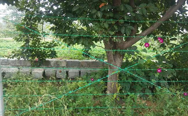 刺绳护栏网案例